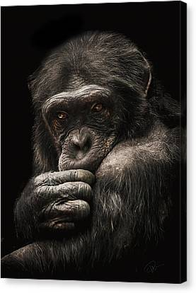 Introvert Canvas Print by Paul Neville