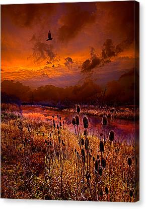 Intuition Canvas Print by Phil Koch