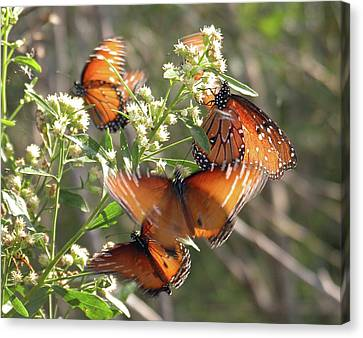 Butterfly In Motion Canvas Print - Invasion by Reagan Ross