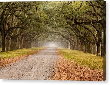 Live Oaks Canvas Print - Inviting by Eggers Photography