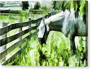 Iowa Farm Pasture And White Horse Canvas Print by Wilma Birdwell