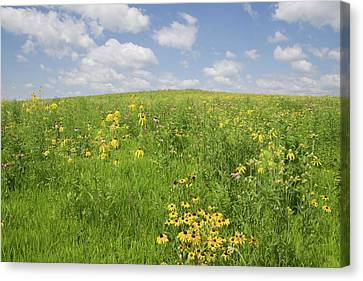 Iowa Summer Flowers I Canvas Print by Dylan Punke