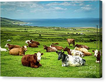 Ireland - Westcoast Canvas Print