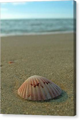 Iridescent Seashell Canvas Print by Juergen Roth