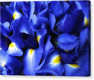 Iris Abstract Canvas Print by Jessica Jenney