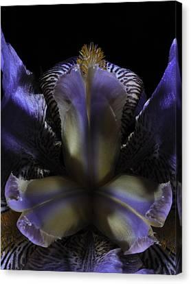 Iris Aglow Canvas Print