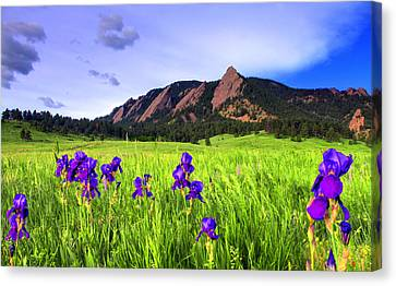 Iris And Flatirons Canvas Print by Scott Mahon