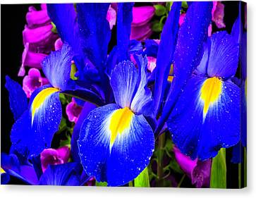 Foxglove Flowers Canvas Print - Iris And Foxglove by Garry Gay