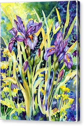 Iris Canvas Print by Ann  Nicholson