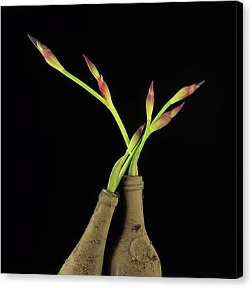 Iris Canvas Print by Bernard Jaubert