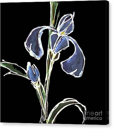 Iris-blue Canvas Print