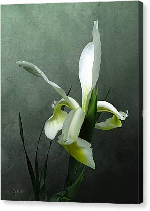 Iris Celebration Canvas Print by I\'ina Van Lawick
