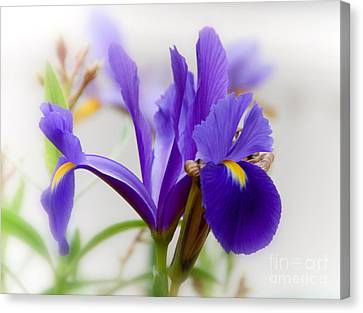 Canvas Print featuring the photograph Spring Iris by Elaine Manley