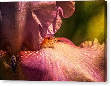 Iris Canvas Print by Elena E Giorgi