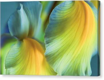 Iris Fantasy Canvas Print