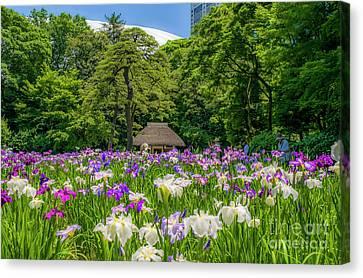 Iris Field In Mid Tokyo Canvas Print