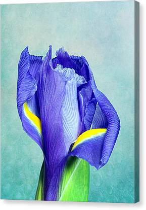 Iris Flower Of Faith And Hope Canvas Print by Tom Mc Nemar