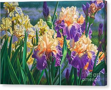 Hybrid Canvas Print - Iris Garden 1 by Fiona Craig