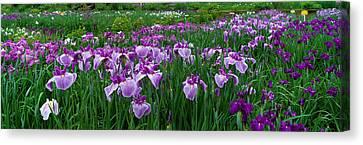Iris Garden Nara Japan Canvas Print by Panoramic Images