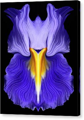 Iris Canvas Print by Gary Zuercher
