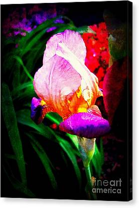 Iris Glow Canvas Print by Janine Riley
