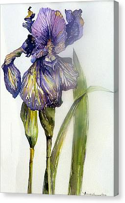 Iris In Bloom Canvas Print by Mindy Newman