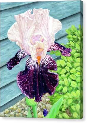 Iris In The Spring Rain Canvas Print