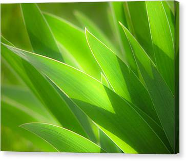 Iris Leaves Canvas Print by Utah Images