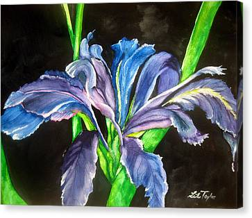 Canvas Print featuring the painting Iris by Lil Taylor