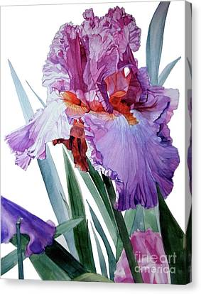 Watercolor Of A Tall Bearded Iris In Pink, Lilac And Red I Call Iris Pavarotti Canvas Print