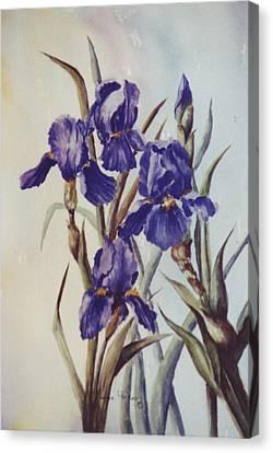 Iris Canvas Print by Lynne Parker