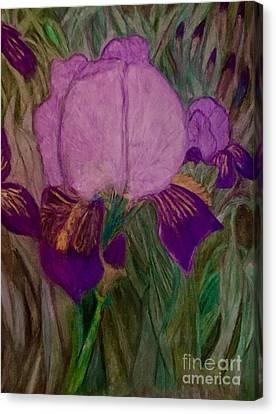 Iris - Magic Man. Canvas Print
