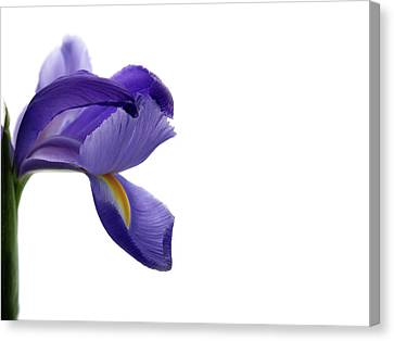 Canvas Print featuring the photograph Iris by Marie Leslie