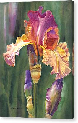 Iris On The Warm Side Canvas Print by Sharon Freeman