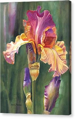 Irises Canvas Print - Iris On The Warm Side by Sharon Freeman