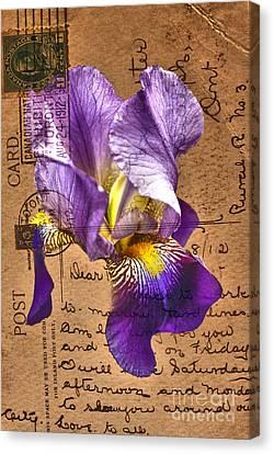Iris On Vintage 1912 Postcard Canvas Print
