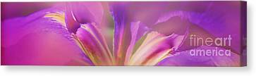 Iris Panorama Canvas Print