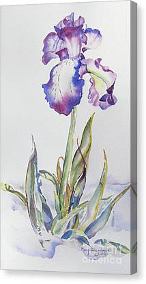 Canvas Print featuring the painting Iris Passion by Mary Haley-Rocks