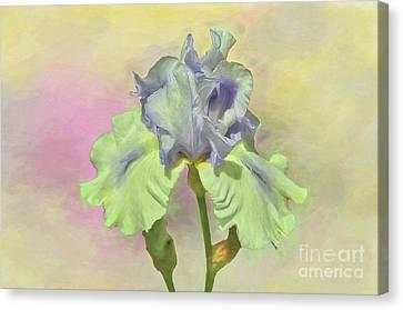 Iris Pastels Canvas Print