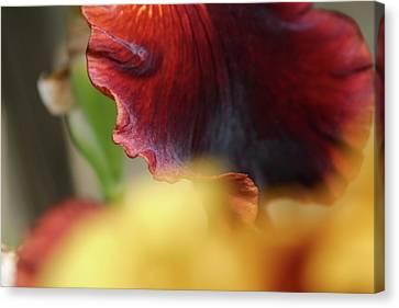 Iris Petals 2 -  Canvas Print