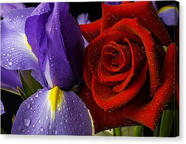 Close Up Floral Canvas Print - Iris Rose by Garry Gay