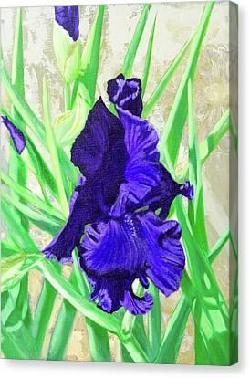 Iris Royalty Canvas Print