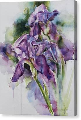 Iris Song Canvas Print