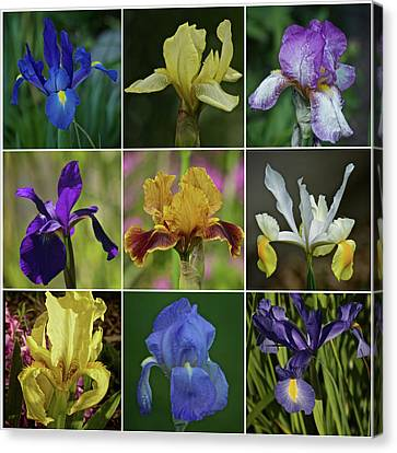 Iris Spring 2017 Collection Canvas Print by Richard Cummings