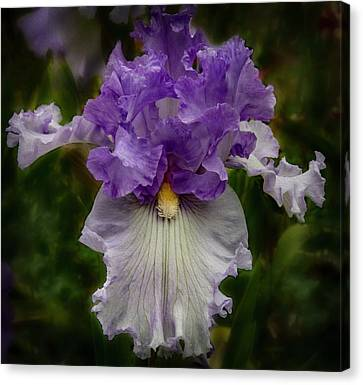 Canvas Print featuring the photograph Iris Standout by Jean Noren