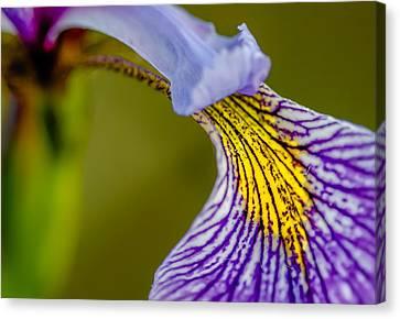 Iris The Greek Goddess Of The Rainbow Canvas Print
