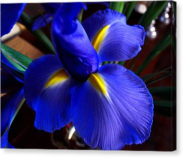 Canvas Print featuring the photograph Iris Unfolding by Paul Cutright