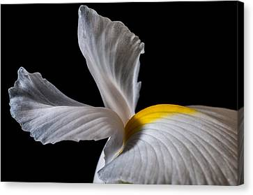 Iris Wings Canvas Print