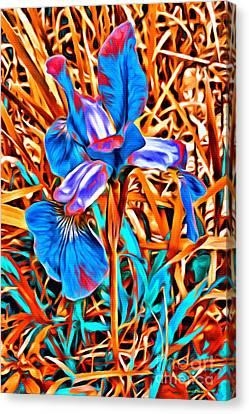 Iris Wow Canvas Print