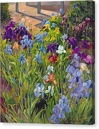 Horticultural Canvas Print - Irises And Summer House Shadows by Timothy Easton